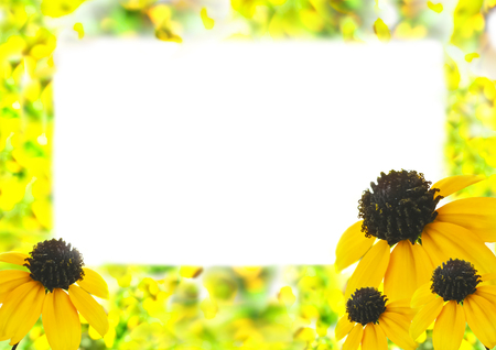 Mock up template with rudbeckias and white text space. Summer background with floral frame for scrapbook pages, photo albums, greeting cards, postcards, invitations Stock Photo