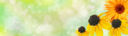 Summer floral banner. Ð¡alendula and rudbeckias against light green background with copy space. Flower corollas close up. Soft bokeh. Landscape panorama. Dreamy, romantic, airy, elegant image 免版税图像