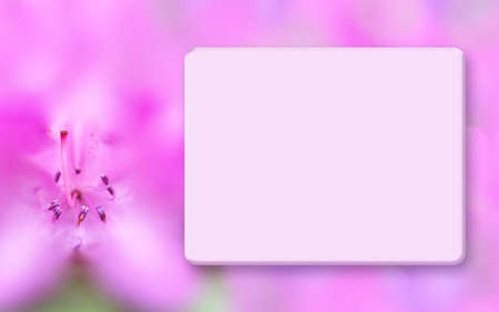 Floral template mock up, light box and blurred background. Spring, summer background with pink azalea. Border for greeting cards, postcards, scrapbooking, photo albums, web pages, presentations Stockfoto