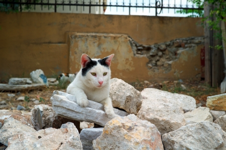 A cat near Acropolis, Athens, Greece Stock Photo - 16819866