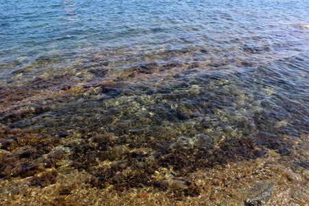 fond marin: des fonds marins dans la baie de Cadaques, Catalogne (Espagne) Banque d'images