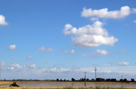 Crop of plantation of rice in the Delta of the Ebro, Catalonia (Spain)