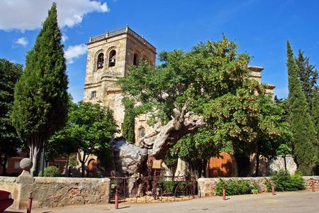 plateresque: dry elm next to the church Hawthorn, Soria (Spain)