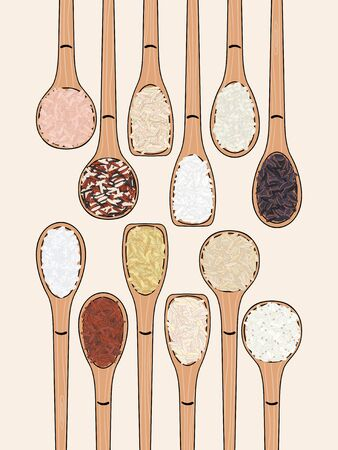 Set of spoons with rice. Top view. Kitchen, cooking poster. Sushi, brown, parboiled, jasmine, red, arborio, wild, basmati, rosematta. Organic food. Hand drawn vector illustration