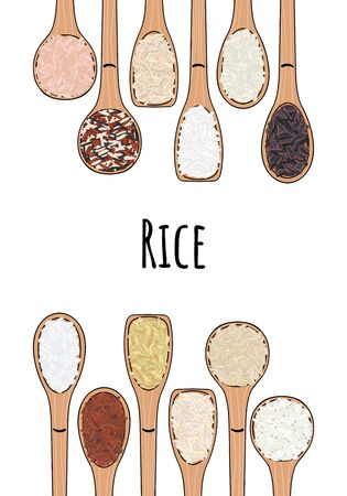 Set of spoons with rice. Top view. Border food frame. Sushi, brown, parboiled, jasmine, red, arborio, wild, basmati, rosematta. Organic healthy food. Hand drawn vector illustration