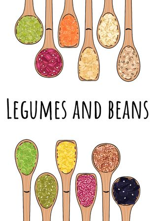 Set of spoons with beans and legumes. Top view. Border food frame. Chickpea, kidney bean, mung, soy, lentils, pinto beans, adzuki, lima beans. Organic healthy food. Hand drawn vector illustration
