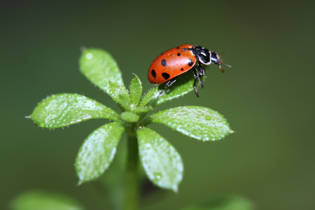 peddle: Ladybug on Peddle Stock Photo