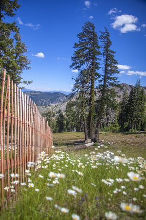 squaw: Sierra Flowers and Trees, Squaw Valley, California