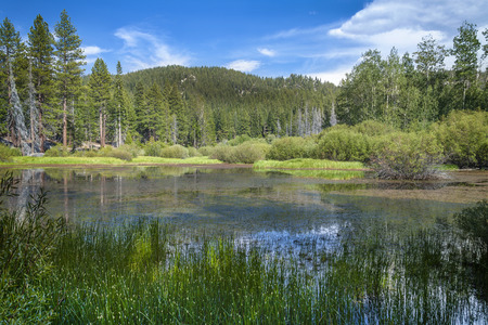 tahoe: Local Mountain top meadow in the Lake Tahoe basin.