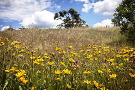 Un champ de fleurs à Grant Ranch Park à San Jose, en Californie, pris un jour de printemps. Banque d'images - 79647308