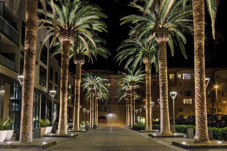 This is an image of a row of palm trees located in the heart of San Joses downtown district. The scene is a well-lighted set of palm tree situated along a pedestrian walkway, which leads to shops and restaurants. Banco de Imagens