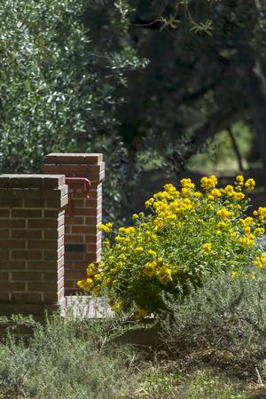 この写真は、サンフランシスコ、カリフォルニアの近く正式な植物園で撮影されました。春が到着した、花が咲いています。この画像は、美しい黄 写真素材