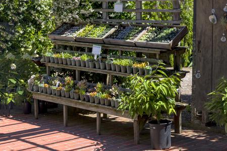この写真は、サンフランシスコ、カリフォルニアの近く正式な植物園で撮影されました。春が到着した、花が咲いています。このイメージは、古い 写真素材