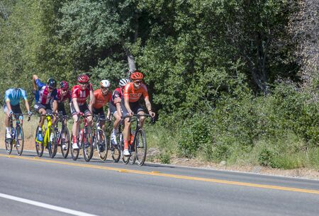 Amgen, Tour of California, SACRAMENTO, CA �May 13, 2019: Amgen, Tour of California race is on it�s way to South Lake Tahoe, California during stage 2 from Rancor Cordova, California.  In the image the peloton is working it�s way on Bass Lake Road in