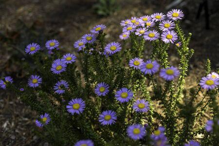 Flower Garden, SAN FRANCISCO, CA – September 6, 2016: An image of flowers in a botanical garden located in San Francisco's Golden Gate park.