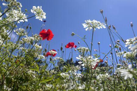 Flower Garden, SAN FRANCISCO, CA � June 10, 2017: An image of flowers in a botanical garden located in San Francisco�s Golden Gate park.