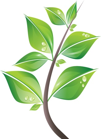 Branch of fresh green leaves with drops illustration.