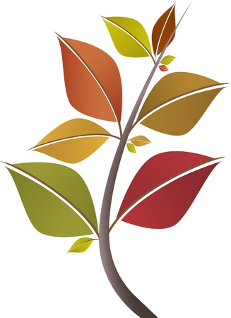Branch of colorful fall leaves isolated on white background.