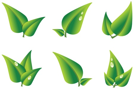 Set of green leaves isolated on white background. Vector illustration Vector
