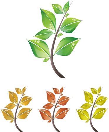 Branches of leaves with drops for different seasons isolated on white background. Vector illustration Vector