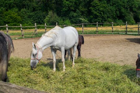 Horses in a coral grazing 02 Stockfoto