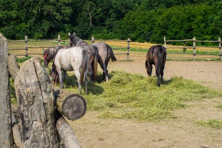 Horses in a coral grazing 08