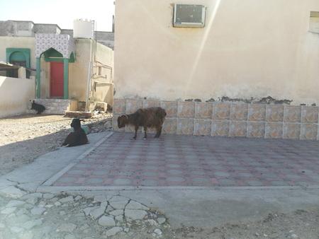 village in Oman Stockfoto