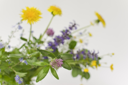 bouquet of clover; buttercup; forget-me-not; lungwort and dandelion photo