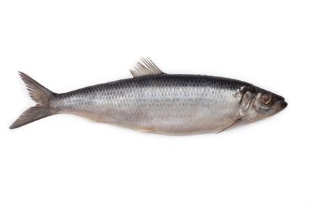 塩漬けのニシン魚に孤立した白い背景