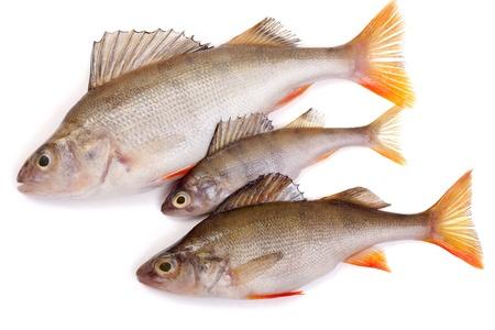 白い背景の上の 3 つの鮭 写真素材