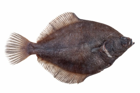 plaice: Fresh caught plaice lying on a white