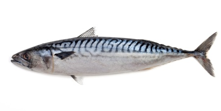 salted: Mackerel on a white background