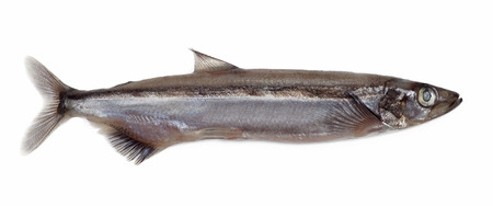 Salted capelin fish isolated on white background Stock Photo - 23374868