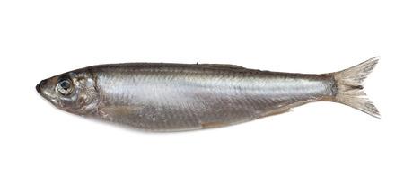 Salted sprat fish isolated on white background Stock Photo - 23374869