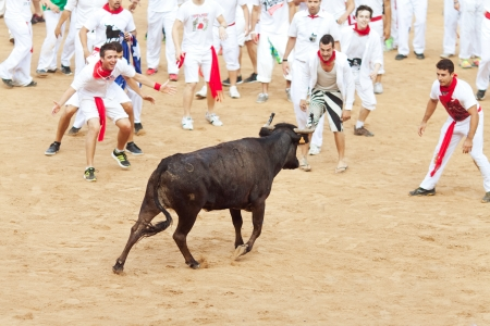 PAMPLONA, SPAIN - JULY 10  People having fun with young bulls at San Fermin festival  Pamplona, Navarra, Spain 10 July 2013