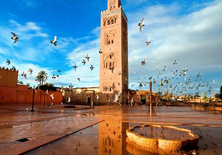 pigeon: Koutoubia mosque, Marrakech, Morocco