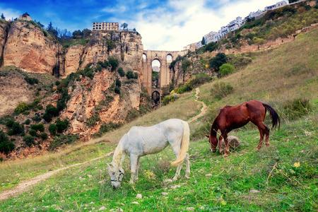 nuevo: Puente Nuevo bridge and horses. Ronda. Spain