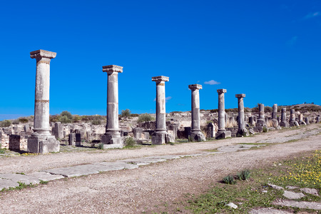 volubilis: Roman ruins in Volubilis Meknes Tafilalet Morocco