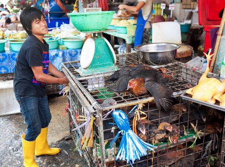 common market: BANGKOK - DECEMBER 19: A street vendor chickens largest market Khlong Toey in Bangkok, on street Rama IV, December 19 , 2013 A common way of earning a living amongst the local people in Thailand.
