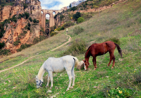 Puente Nuevo bridge and horses. Ronda. Spain