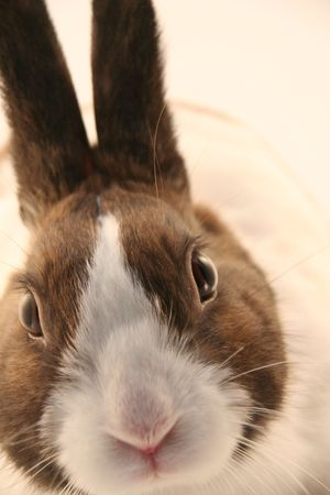 rabit: Bunny Rabbit close up Stock Photo