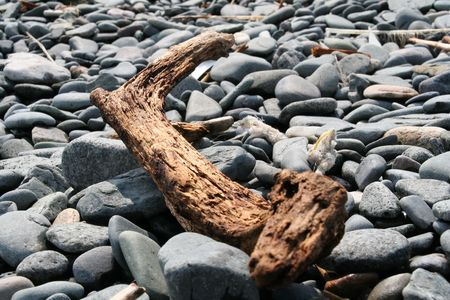 land shell: Driftwood on stone
