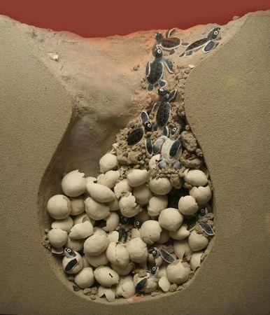 Turtles being born