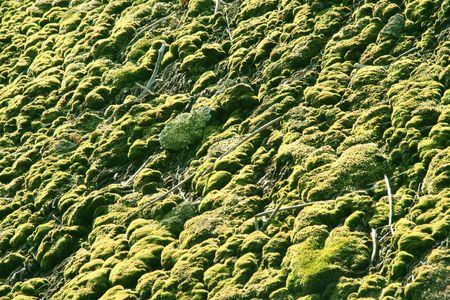 fibrous: green fungus