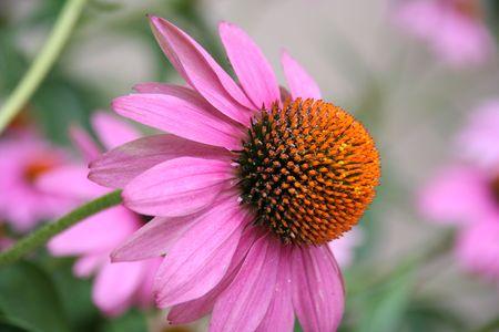 unfold: a wonderful flower