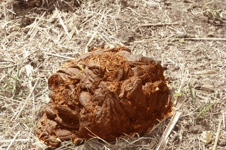 cow dung  poop Stock Photo