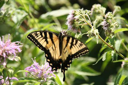 beautiful butterfly 스톡 콘텐츠