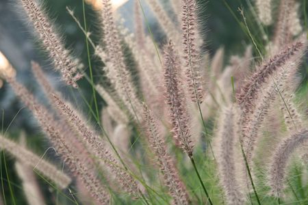 doughy: soft plants