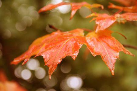食欲の秋を葉します。