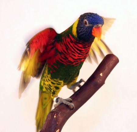 colorful bird 2 Imagens